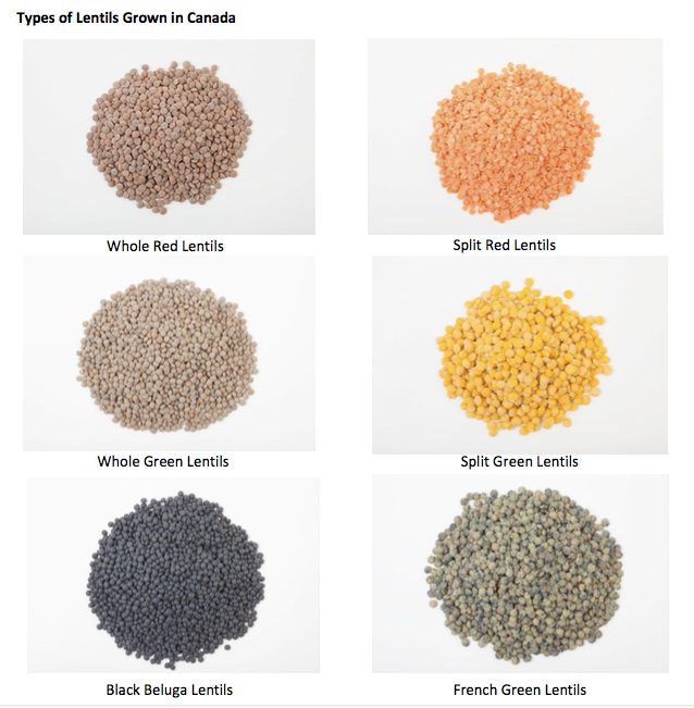 Types of lentils grown in Canada